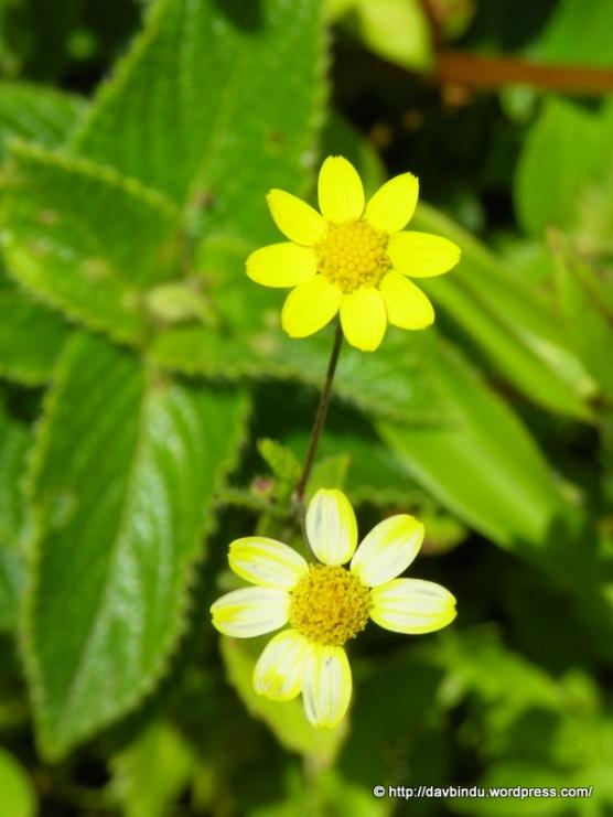 एकाच झाडाची वेगवेगळी फुल... चुलत भाऊ वाटत आहेत ...