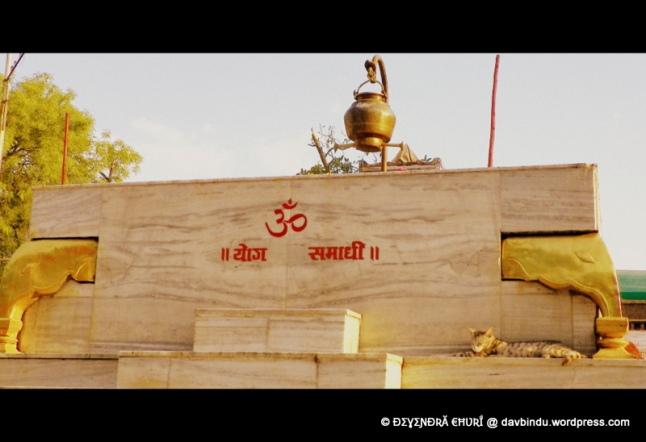योग-समाधीत मग्न मनीमाऊ ...सिद्धेश्वर मंदिर-सोलापूर